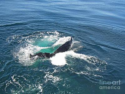 Photograph - Tail Dive by Bette Phelan