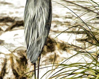 Photograph - Tail Feathers by J Michael Nettik