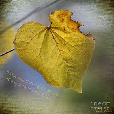 Cercis Photograph - Take Another Little Piece Of My Heart by Linda Lees
