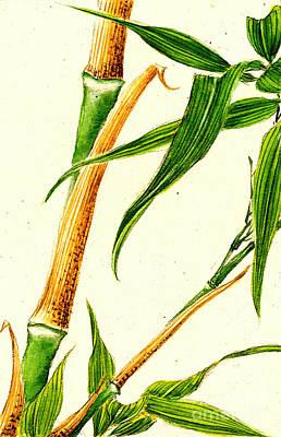 Ink Wash Drawing Photograph - Take Bamboo 1870 Nb by Padre Art