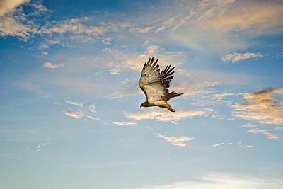 Photograph - Take Flight by Jai Johnson
