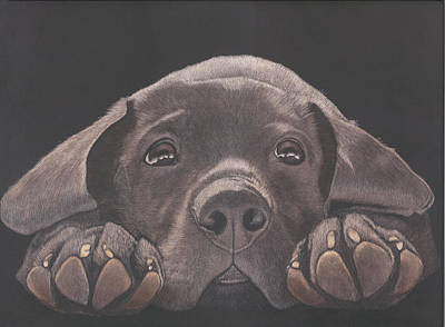 Chocolate Lab Drawing - Take Me Home - Chocolate Lab Puppy by Joelle