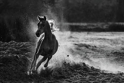 Running Horses Photograph - Take Off by Mohammed Alnaser