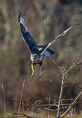 Photograph - Take Off by Randy Hall