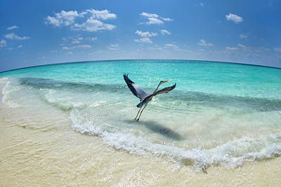 Sea Bird Wall Art - Photograph - Take-off by Roberto Marchegiani