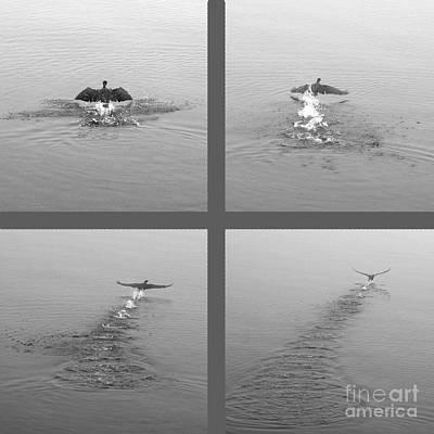 Art Print featuring the photograph Takeoff by Randi Grace Nilsberg