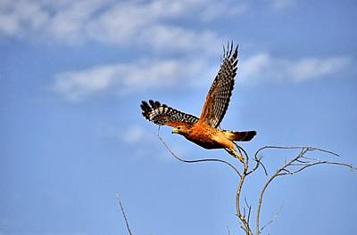 Photograph - Taking Flight by Bill Hosford