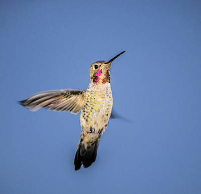 Fluttering Photograph - Taking Flight by Camille Lopez
