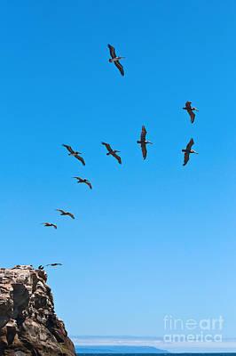 Natural Bridges State Beach Photograph - Taking Flight by Jamie Pham