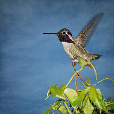 Art Print featuring the photograph Taking Flight by Peggy Hughes