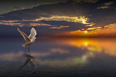 Photograph - Taking Flight by Randall Nyhof