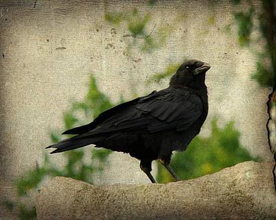 Birds In Graveyard Photograph - Blackbird Is Taking It All In by Gothicrow Images