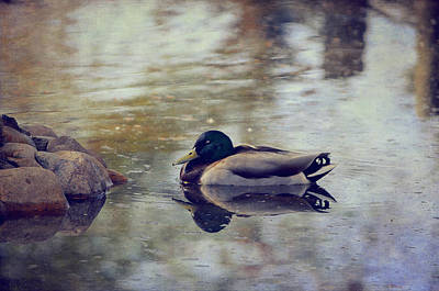 Wild Duck Photograph - Taking A Nap by Maria Angelica Maira