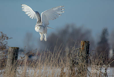 Photograph - Taking Off by Cheryl Baxter