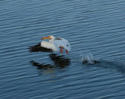 Pelican Digital Art - Taking Off by Ernie Echols