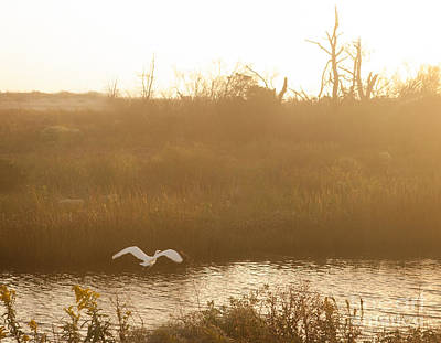 Photograph - Taking Off Into A Golden Sunrise by Carol Lynn Coronios