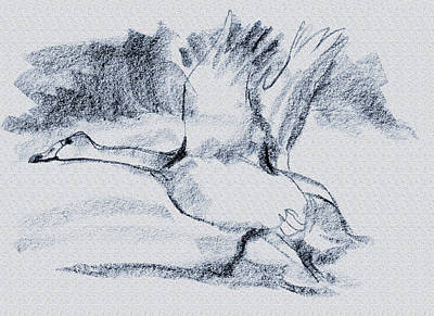 Ducks In Flight Digital Art - Taking Off by Richard Gage