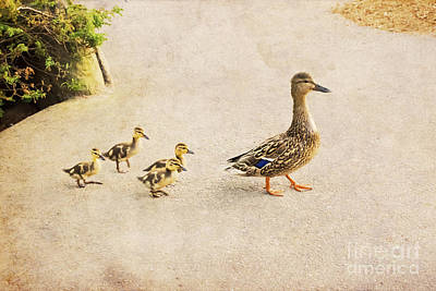 Photograph - Taking The Ducklings For A Walk by Maria Janicki