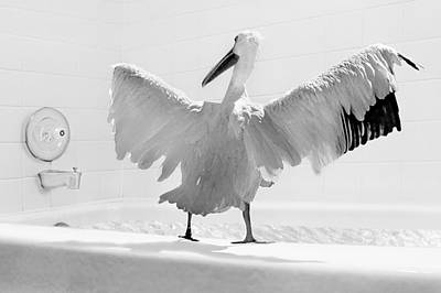 Absurdity Photograph - Taking The Plunge - Pelican - Bathroom by Nikolyn McDonald