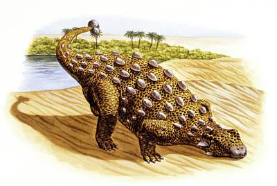 Paleozoology Photograph - Talarurus Dinosaur by Deagostini/uig