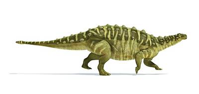 Prehistorical Photograph - Talarurus Dinosaur by Leonello Calvetti