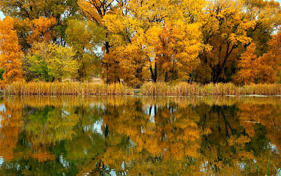Photograph - Tales Of The Cottonwood  by Eric Rundle