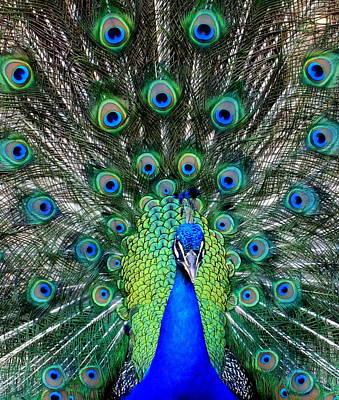 Big Birds Photograph - Talk Of The Walk by Karen Wiles