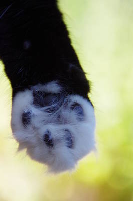 Photograph - Talk To The Paw by Marilyn Wilson