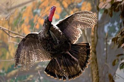 Photograph - Talkin Turkey by Sennie Pierson