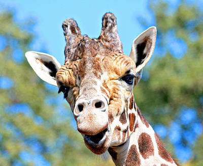 Photograph - Talking Giraffe by Trina  Ansel