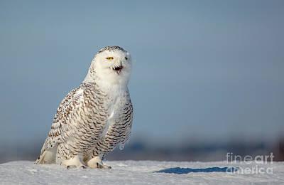 Photograph - Talking Snowy by Cheryl Baxter