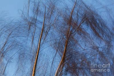 Photograph - Talking Trees by Casper Cammeraat