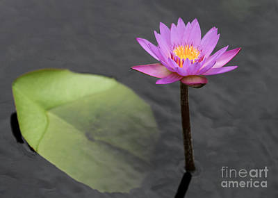 Photograph - Tall And Pink Water Lily by Sabrina L Ryan