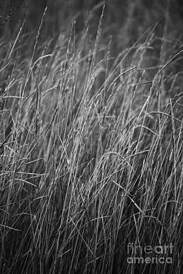 Photograph - Tall Black And White Stalks Blowing In The Wind by Jackie Farnsworth