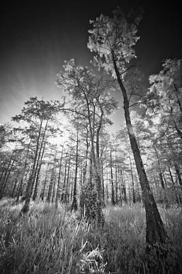 Tall Cypress Trees Art Print