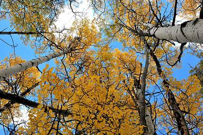 Photograph - Tall Golden Aspens by Marilyn Burton