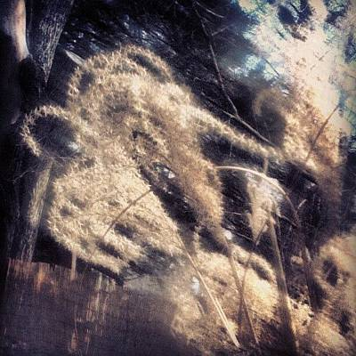 Skylines Wall Art - Photograph - Tall Grass by Genevieve Esson
