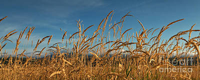 Tall Grass II Print by Beve Brown-Clark Photography