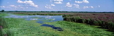 Tall Grass In A Lake, Finger Lakes Art Print