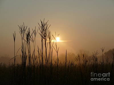 Photograph - Tall Grass Morning 1 by Photography by Tiwago