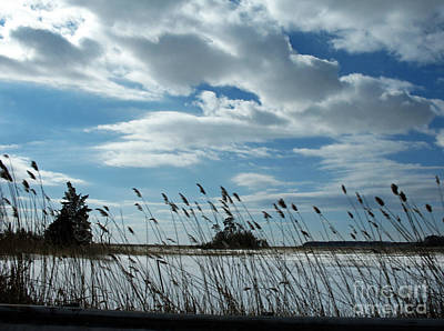 Photograph - Tall Grass Near Jersey Shore by NightVisions