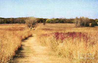 Photograph - Tall Grass Prairie by Pam  Holdsworth