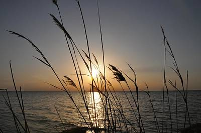 Chesapeake Bay Photograph - Tall Grass Sunset by Bill Cannon