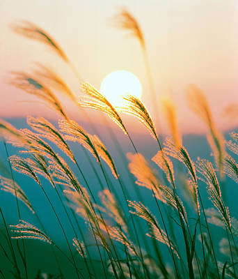 Tall Grass With Sunset In Background Art Print by Panoramic Images