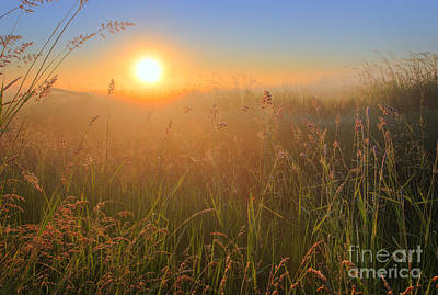 Photograph - Tall Grasses by Dan Jurak