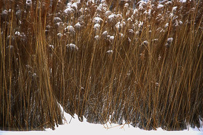 Photograph - Tall Grasses In Winter by Jim Vance