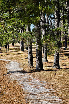 Photograph - Tall Pines Walking Trail by Greg Jackson