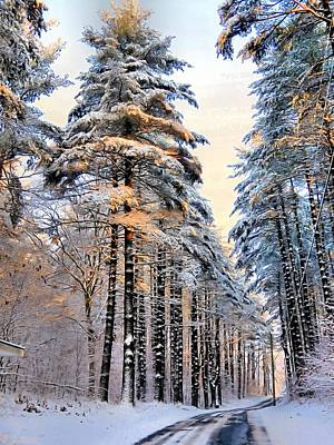 Photograph - Tall Snowy Pines by Janice Drew