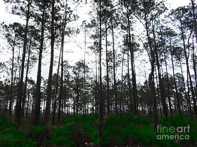 Tall Tree Forest Art Print