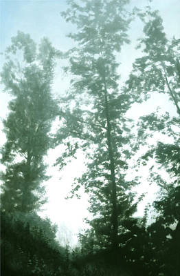 Painting - Tall Trees Olots 132 X 200 Cm by Thomas Darnell